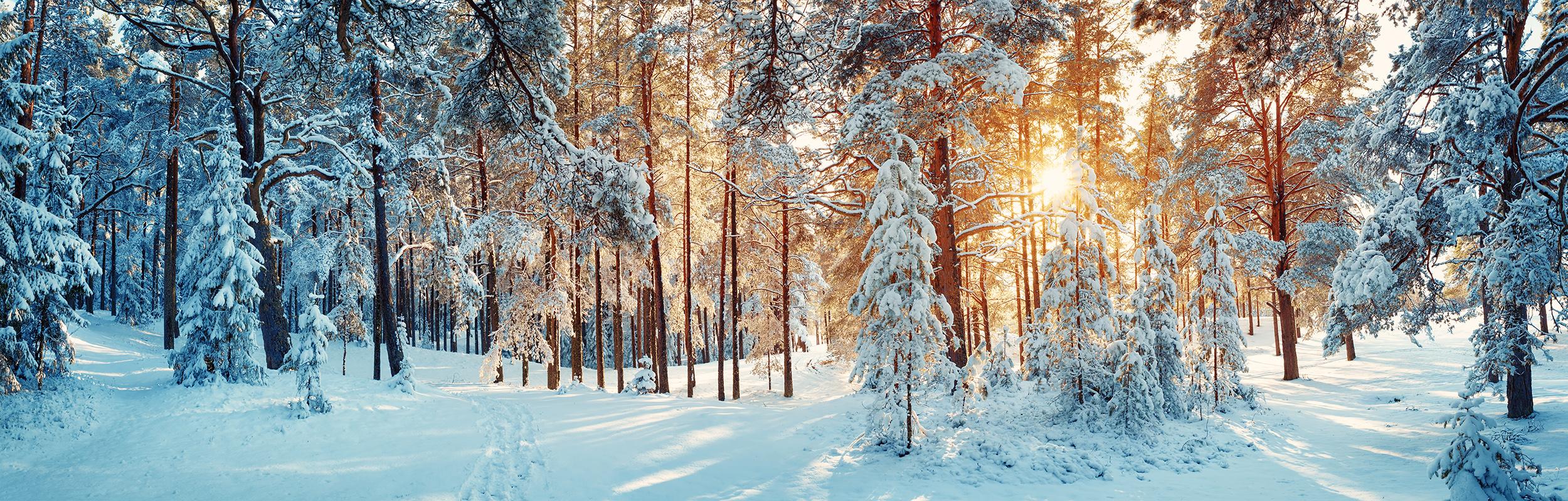 Slider_2_Schnee